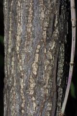 Euonymus Alatus Winged Wahoo Nre 436 Also Eeb Or Environ